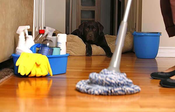 Влажная уборка комнаты поможет создать хороший микроклимат