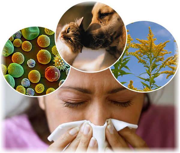 Основные причины развития аллергического ринита