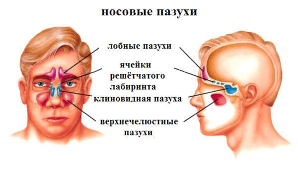 Расположение пазух возле носа
