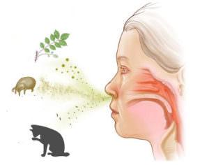 Одной из причин заложенности носа и сильного насморка является аллергия