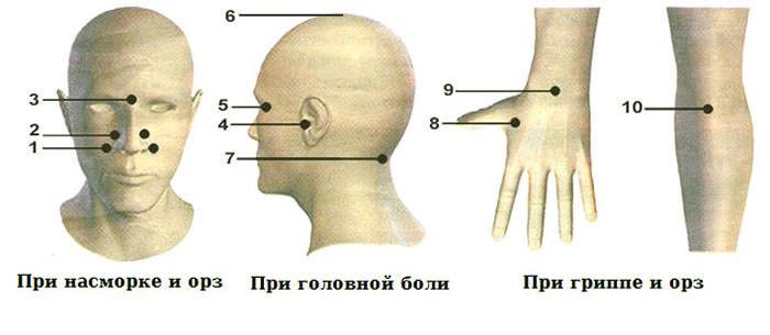 Точки нанесения бальзама при насморке, головной боли и гриппе