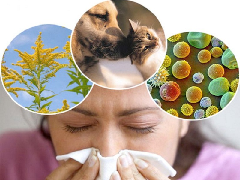 Возбудители аллергиеческого ринита