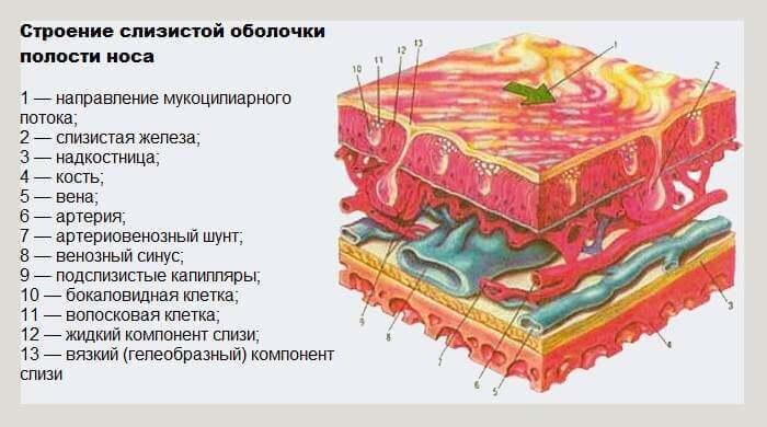 metody-vosstanovleniya-slizistoj-obolochki-nosa1
