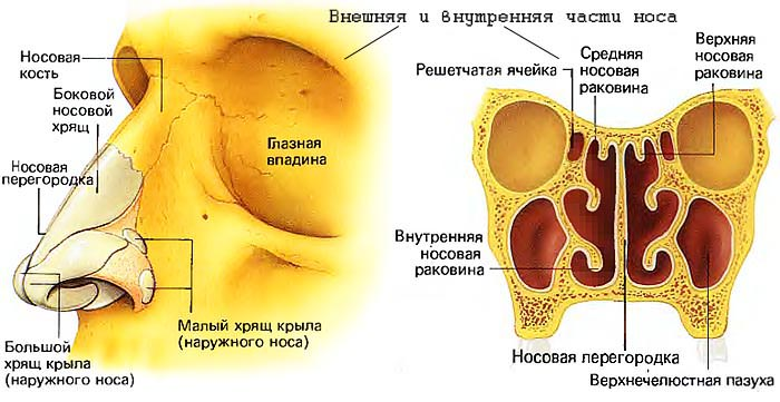 iskrivlenie-nosovoi-peregorodki-lechenie-bez-operacii